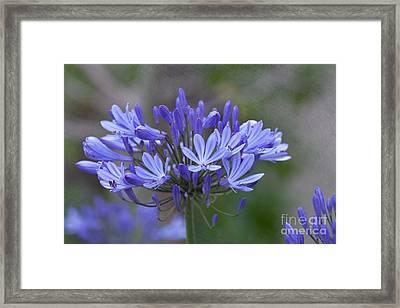 Purple Glory Framed Print