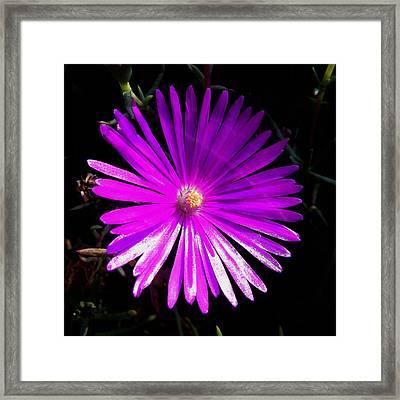 Purple Glow Framed Print by Pamela Walton