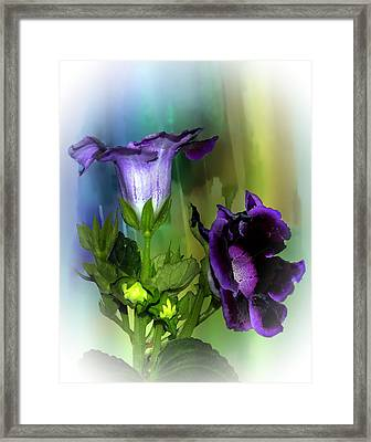 Purple Gloxinia II Framed Print