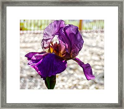 Purple Godess Framed Print by Camille Lopez