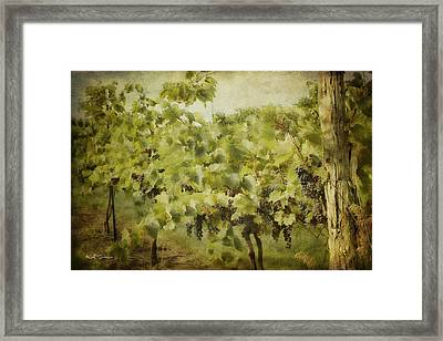 Purple Grapes On The Vine Framed Print by Jeff Swanson