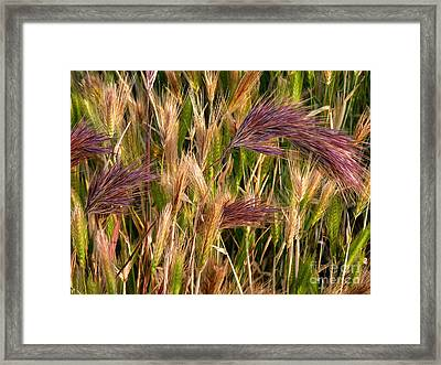 Purple Grasses Framed Print