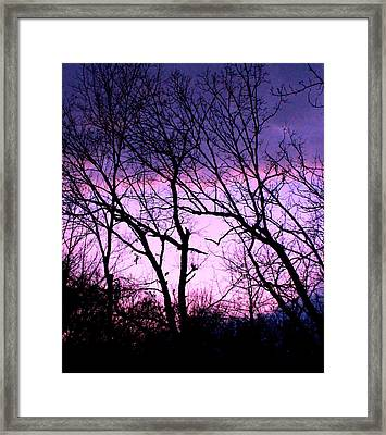 Framed Print featuring the photograph Purple Haze by Candice Trimble
