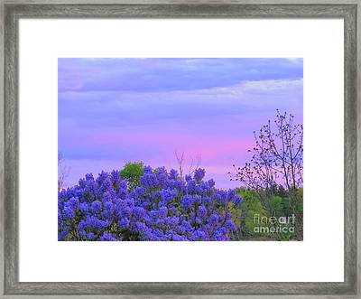 Purple Haze Framed Print by David Lankton