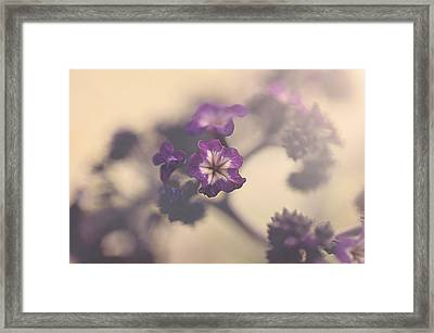 Purple Haze Framed Print by Faith Simbeck