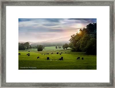 Purple Haze Framed Print by Paul Herrmann