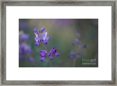 Purple Haze Framed Print by  Ruth Jolly