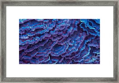 Purple Haze Framed Print by Sherry Lasken