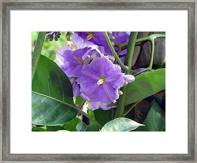 Purple Hearts Framed Print by Debi Singer