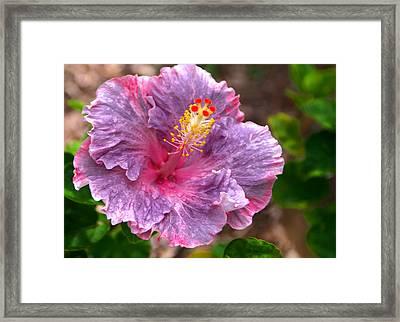Purple Hibiscus Framed Print
