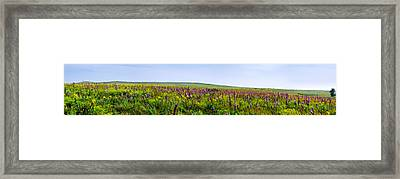 Purple Hills Framed Print by Eric Benjamin