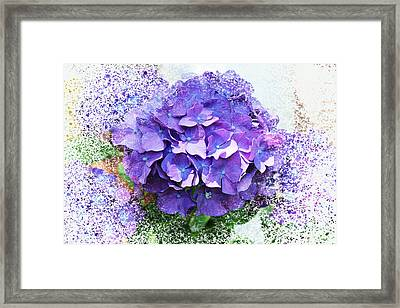 Purple Hydrangea Abstract Framed Print