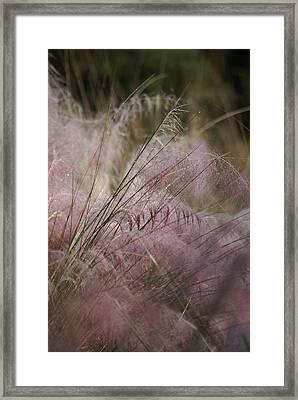 Purple In Bloom Framed Print by Patricia Twardzik
