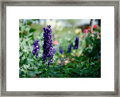 Purple In The Garden Framed Print by Linda Unger