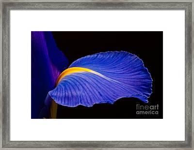 Purple Iris #1 2010 Framed Print by Art Barker