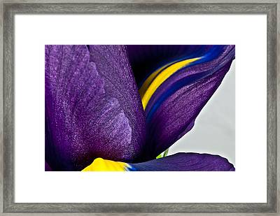 Purple Iris  #2 2010 Framed Print by Art Barker