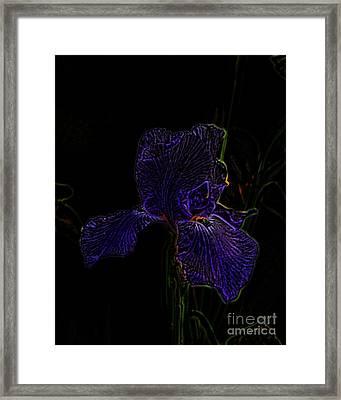 Purple Iris Framed Print by Amanda Collins