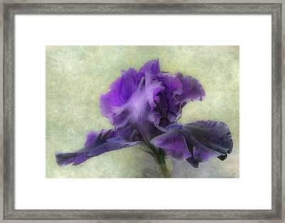 Purple Iris Framed Print by Angie Vogel