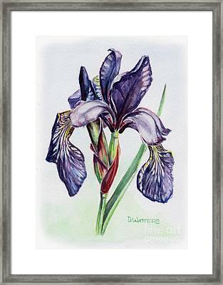Purple Iris Framed Print