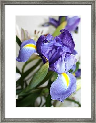 Framed Print featuring the photograph Purple Iris by Ellen O'Reilly
