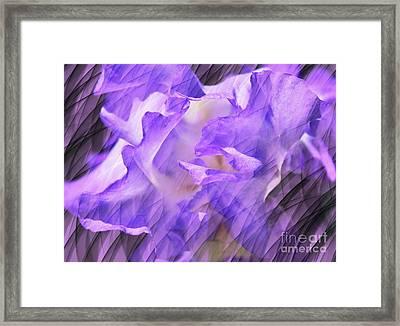 Purple Iris Flower Abstract Framed Print by Judy Palkimas