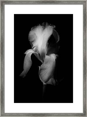 Purple Iris In Black And White Framed Print