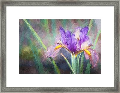 Framed Print featuring the painting Purple Iris In The Early Spring by Ike Krieger