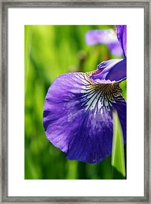 Purple Iris Framed Print by Jamie McBride