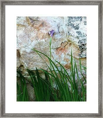 Purple Iris Framed Print by Robert Lozen