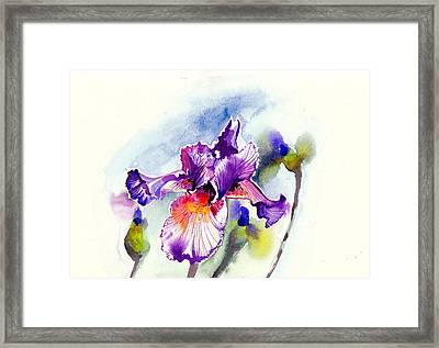 Purple Iris With Buds Watercolor Framed Print