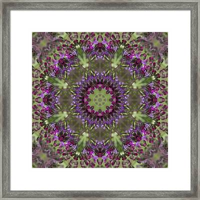 Purple Ironweed Kaleidoscope Framed Print by Kathy Clark