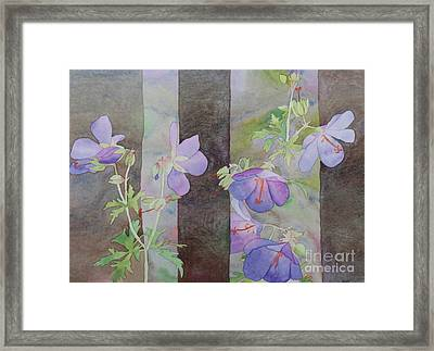 Purple Ivy Geranium Framed Print