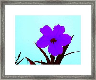 Purple Jack Flower Framed Print