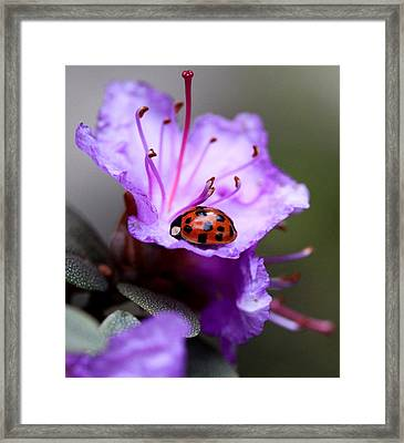 Purple Lady Framed Print by Aaron Aldrich