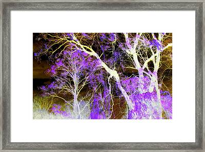 Purple Leaves And White Trees Framed Print