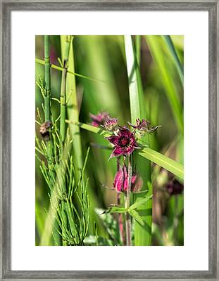 Framed Print featuring the photograph Purple by Leif Sohlman