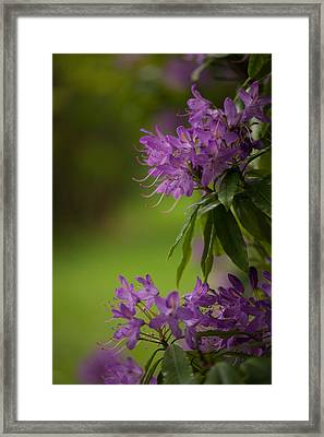 Purple Light Framed Print by Mike Reid