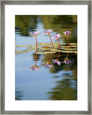 Purple Lillies Framed Print by Peter Tellone