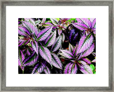 'purple' Framed Print
