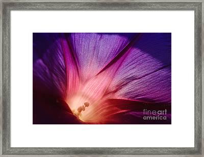 Purple... Framed Print by Ludek Sagi Lukac