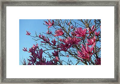 Purple Magnolias Framed Print