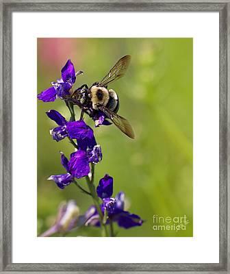 Purple Majesty Framed Print