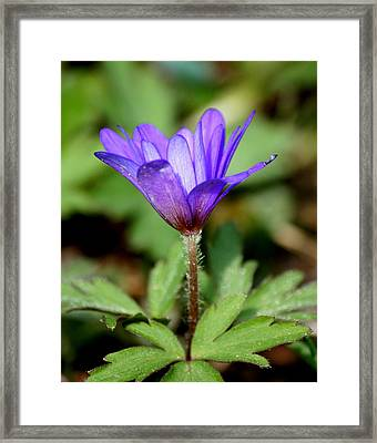 Purple Majesty  Framed Print by Neal Eslinger