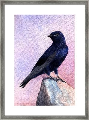 Purple Martin Framed Print