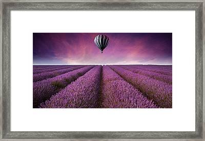 Purple Framed Print by Matthew Gibson