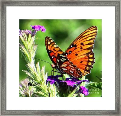 Framed Print featuring the photograph Purple Monach Landing by Ecinja Art Works