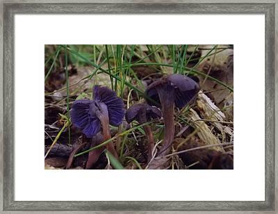 Purple Mushrooms Framed Print by Melissa Quillen