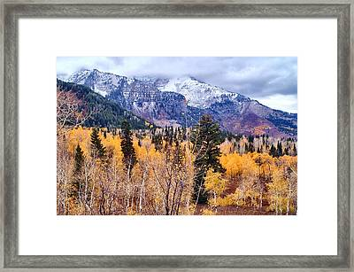 Purple N Gold Framed Print