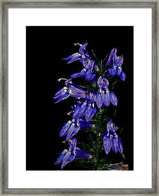 Framed Print featuring the photograph Purple On Black by David Stine