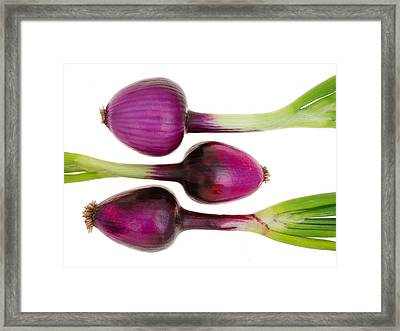 Purple Onions  Framed Print by Jim Hughes